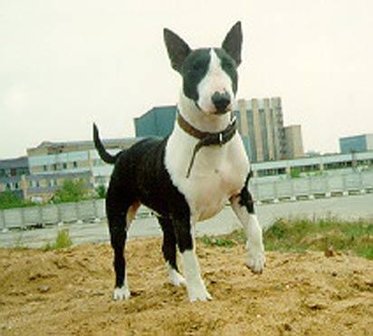 картинки собак: